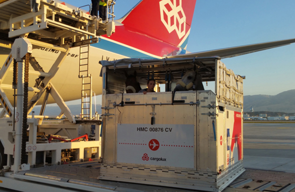 Cargolux Pferdetransport